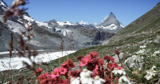 4 Tage Wandern | Oeschinensee und Monte Rosa Hütte