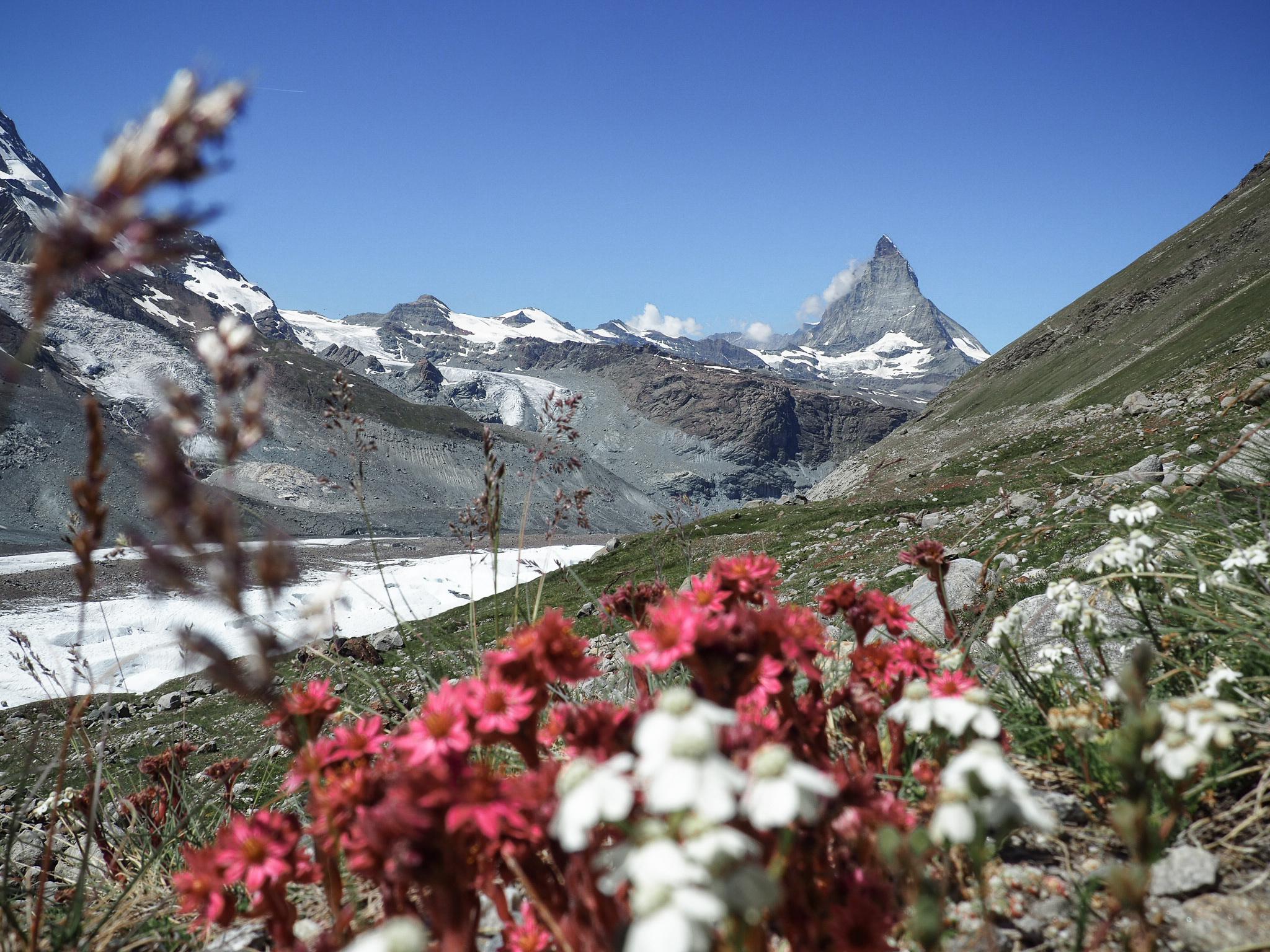 4 Tage Wandern (Kanton Bern und Wallis)